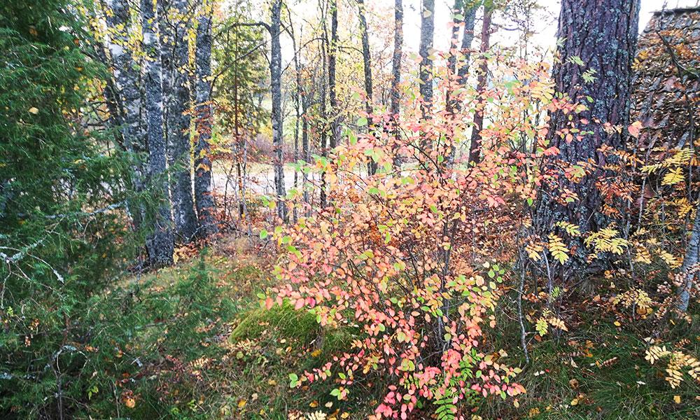 Höstens idémöten - andra delen